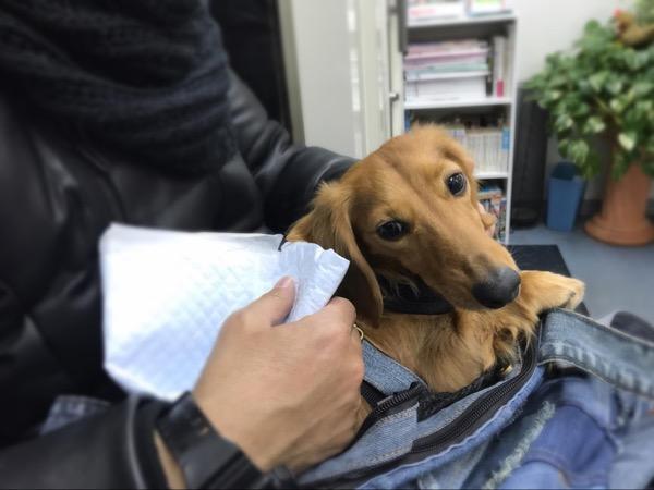 動物病院で診察後の愛犬