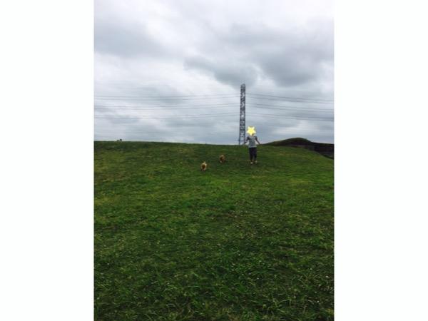 神代植物公園ドッグランの芝生ではしゃぐヒトと犬