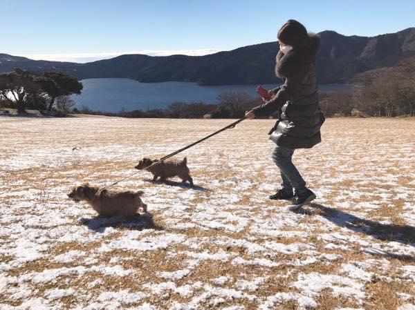 芦ノ湖をバックに犬とお散歩!