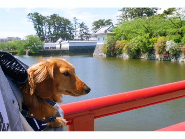 愛犬と学橋の上にて