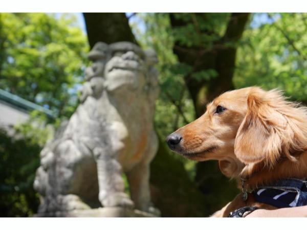狛犬さんと記念撮影