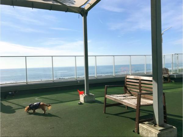 海が一望できる方が小型犬エリア
