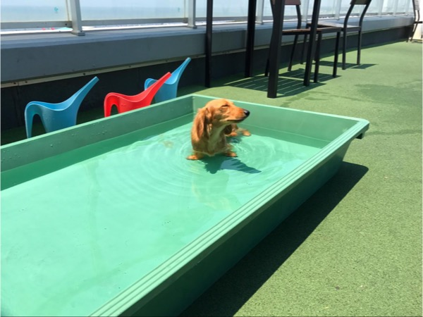ドッグラン内のプールで遊ぶ愛犬