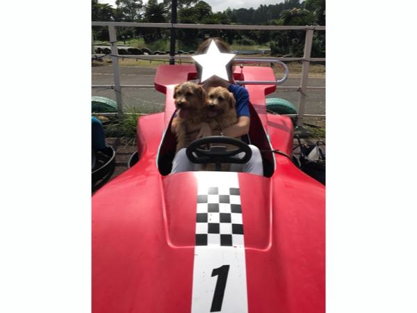記念撮影用のゴーカートに愛犬2匹と乗車