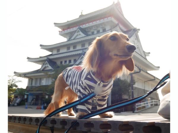 熱海城を背景に愛犬の記念写真