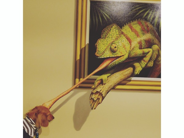 カメレオンに捕まる愛犬
