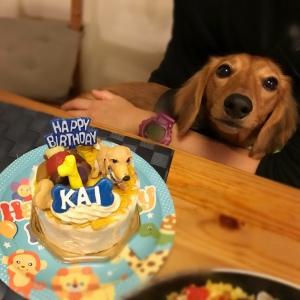 愛犬のフィギュアが乗ったお誕生日ケーキ!