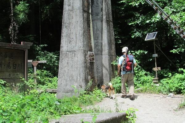 尾白川の吊り橋に向かう犬と人