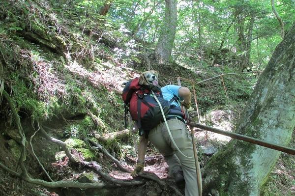 尾白川渓谷ハイキングコースを登る犬と人