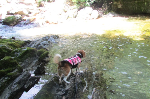尾白川の辺りに立つ犬の後ろ姿