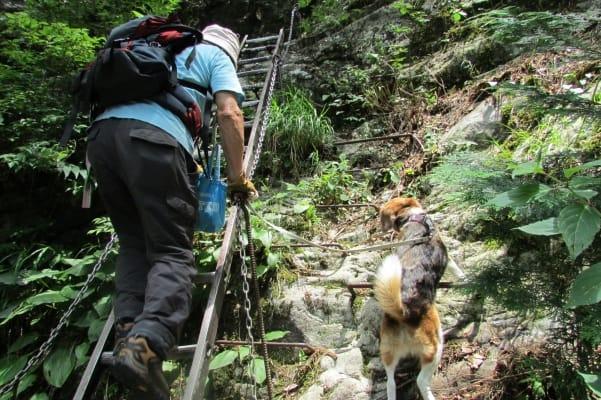 神戸岩に向かうはしごを登る人と犬
