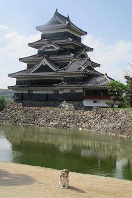 国宝松本城とお堀と犬