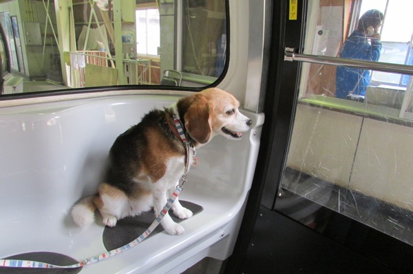 蓼科御泉水自然園に向かうゴンドラに乗る犬