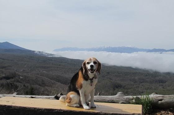 峠の展望台で休憩している犬