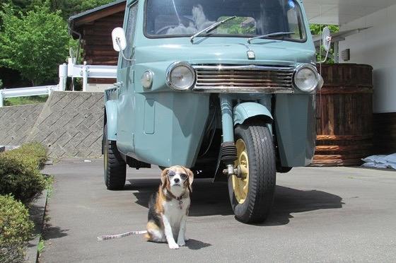 三輪車の隣に座っている犬