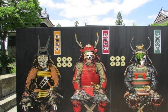 上田城跡の顔出しパネルから顔を出している犬