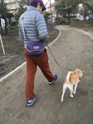 散歩中の柴子(柴犬)の後ろ姿
