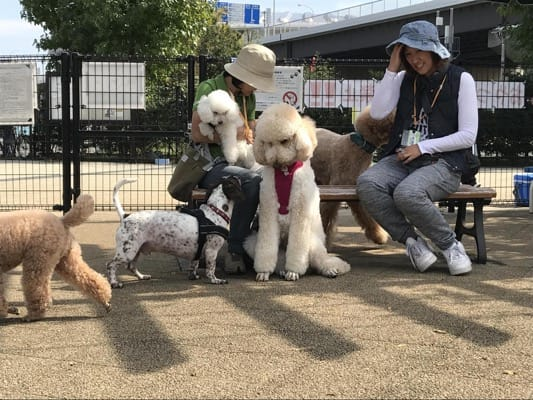 がんじゅ(ミックス犬)