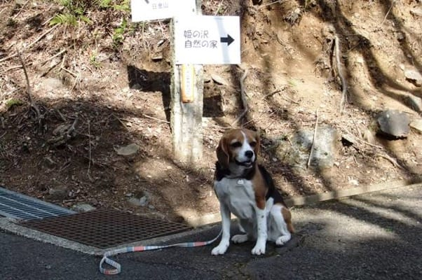 姫の沢公園ハイキングコース