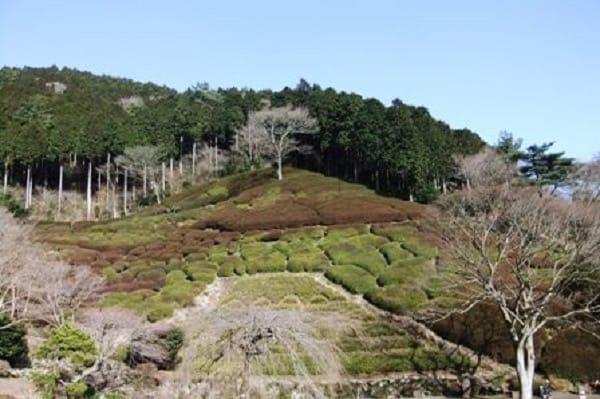 姫の沢公園ツツジの丘