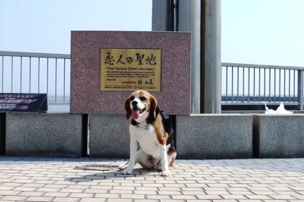 愛犬、熱海の海岸にて