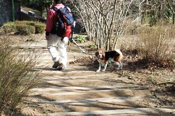 姫の沢公園散策路