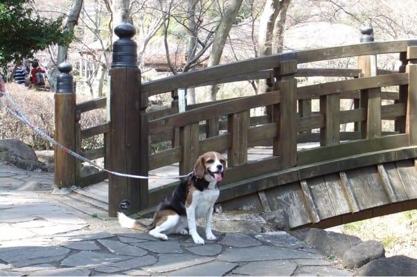 愛犬、熱海梅園にて