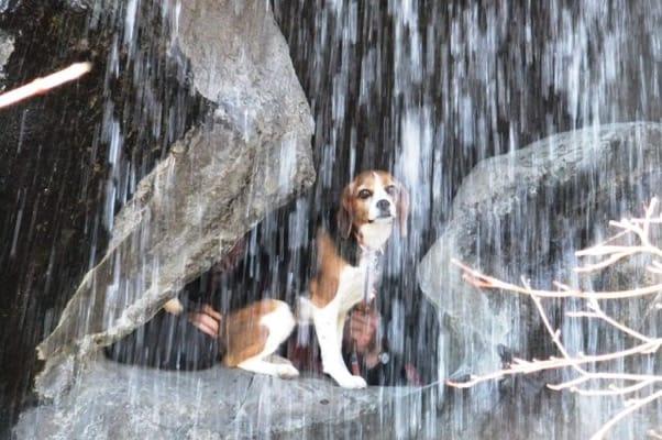 愛犬、熱海梅園裏見の滝にて