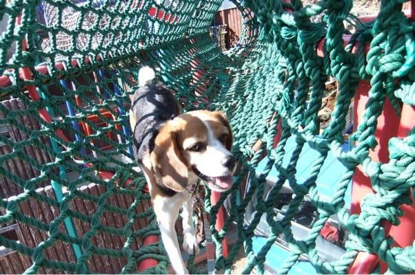 冒険の森ネットツリーのトンネルを歩く愛犬