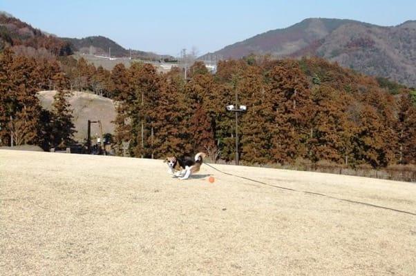 風の丘でボールを追いかける愛犬