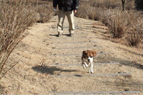 風の丘へ向かう遊歩道を走る愛犬