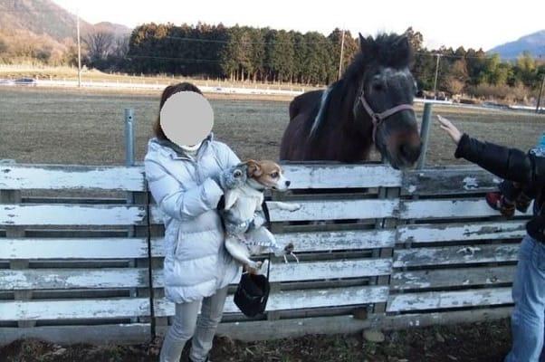 牧場で馬にビビりまくる愛犬