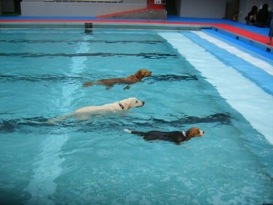 woofプールで泳ぐ3頭の犬