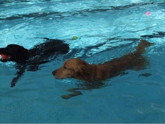 woofプールで泳ぐ2頭の犬