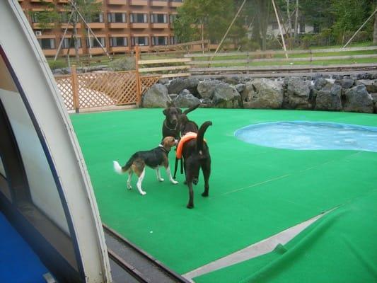 woof屋外の小型犬用プールサイドの犬たち