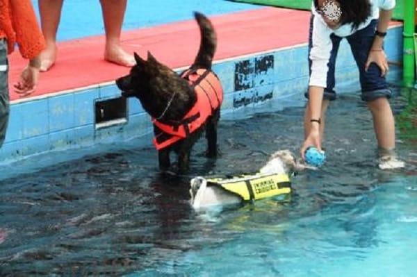 woofプールで泳ぐ犬たち