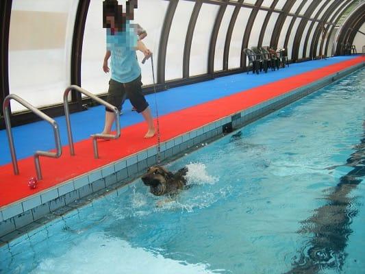 woofプールで泳ぎの練習中のシェパード