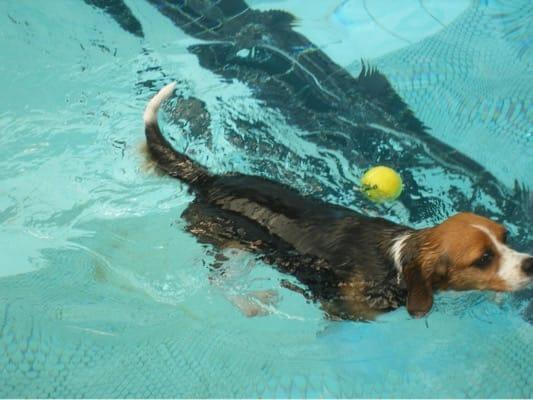 woofプールで泳ぐミックス犬