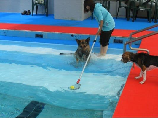 woofプールでボール遊びをする愛犬たち