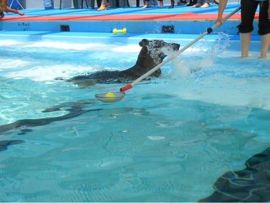 woofプールで泳ぐ犬