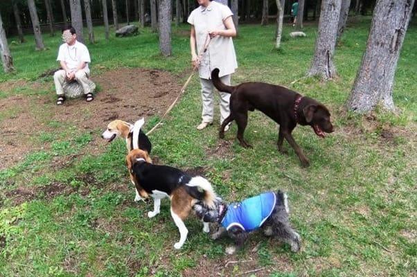 woofのドッグランで遊ぶ犬たち