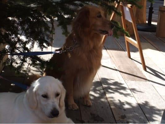 woofのカフェテラス席の木陰で座る大型犬2頭