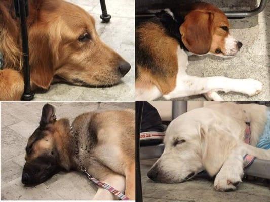 プティシアン店内の床で寝そべる犬たち