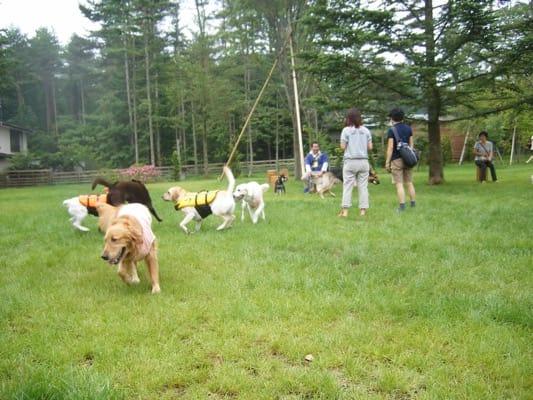 woofのドッグランを走る大型犬たち