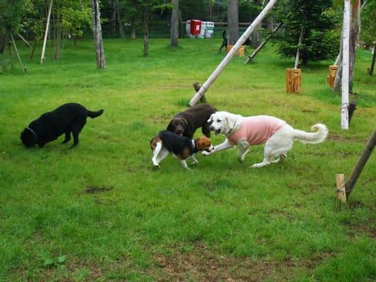 woofのドッグランを走る犬たち