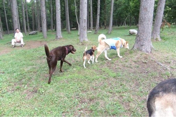 woofのドッグランを並んで歩く大型犬2頭とミックス犬