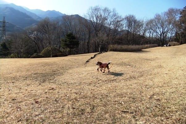 愛犬、七沢森林公園のおおやま広場にて