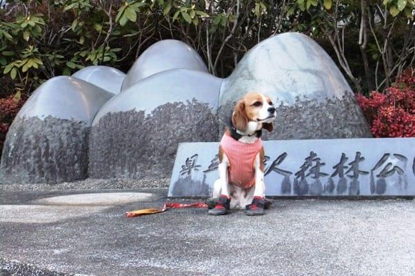 愛犬、七沢森林公園森入り口にて