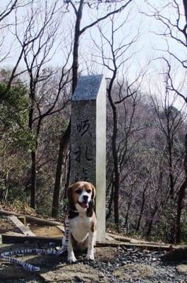 愛犬、巡礼峠にて