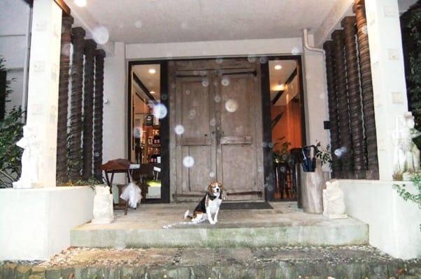 愛犬、四季の蔵正面玄関にて